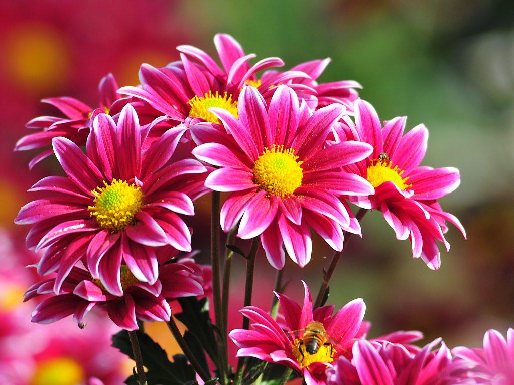 Imagen de Rosas Blancas
